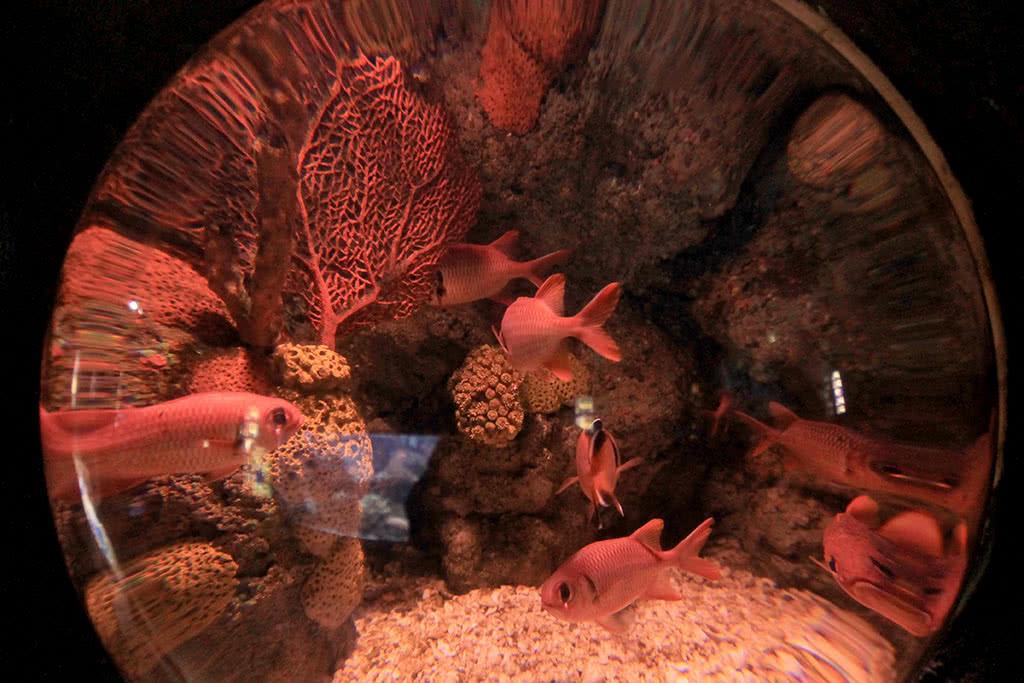 Океанариум SeaLife в Хельсинки