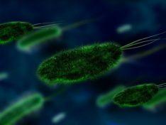 Как бороться с микробами
