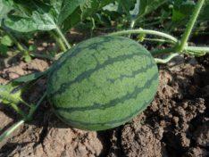 Как растут фрукты и овощи