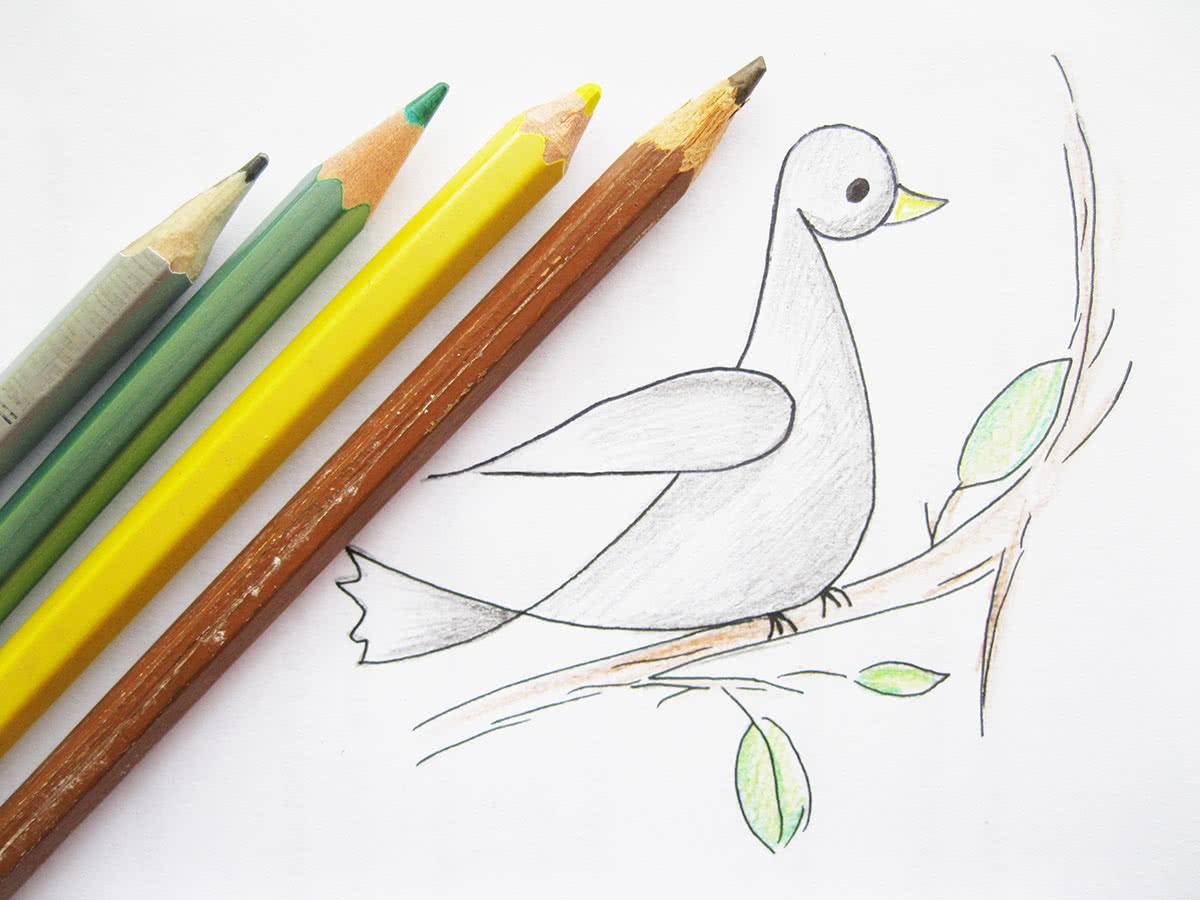 Как нарисовать голубя