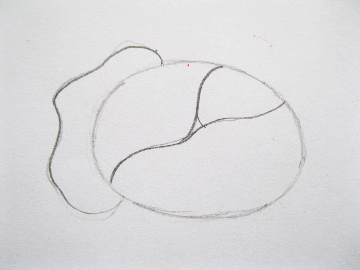 Как нарисовать капусту шаг 3