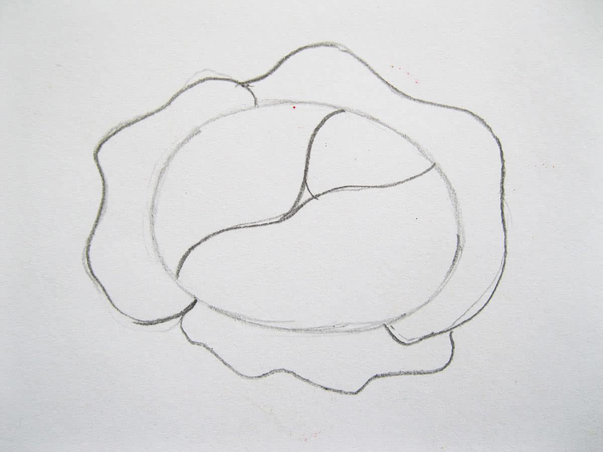 Как нарисовать капусту шаг 4