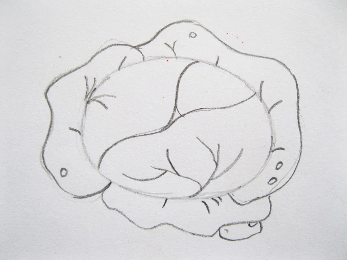 Как нарисовать капусту шаг 5
