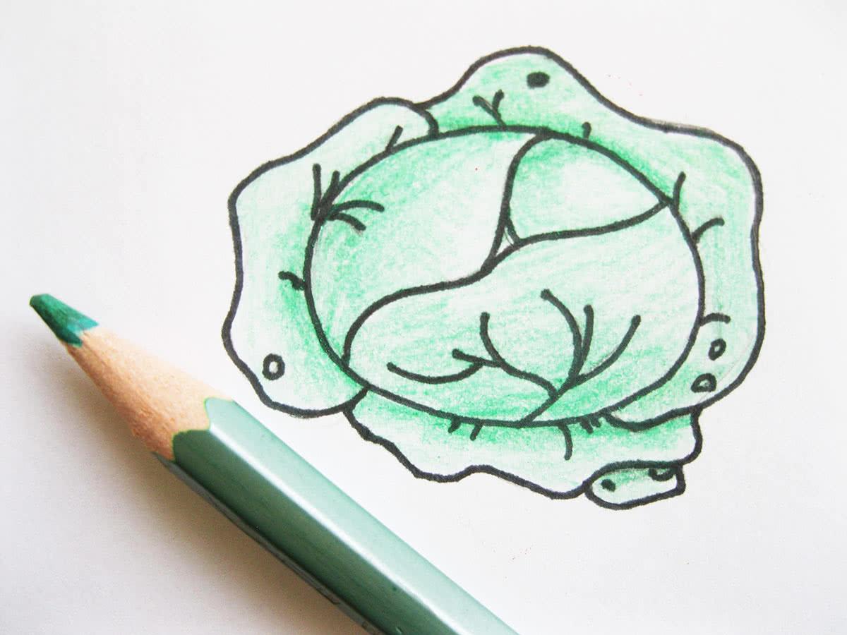 Как нарисовать капусту шаг 7