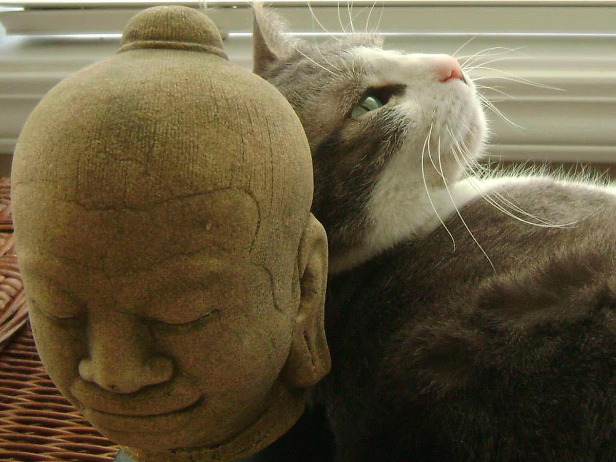 Кошки будда