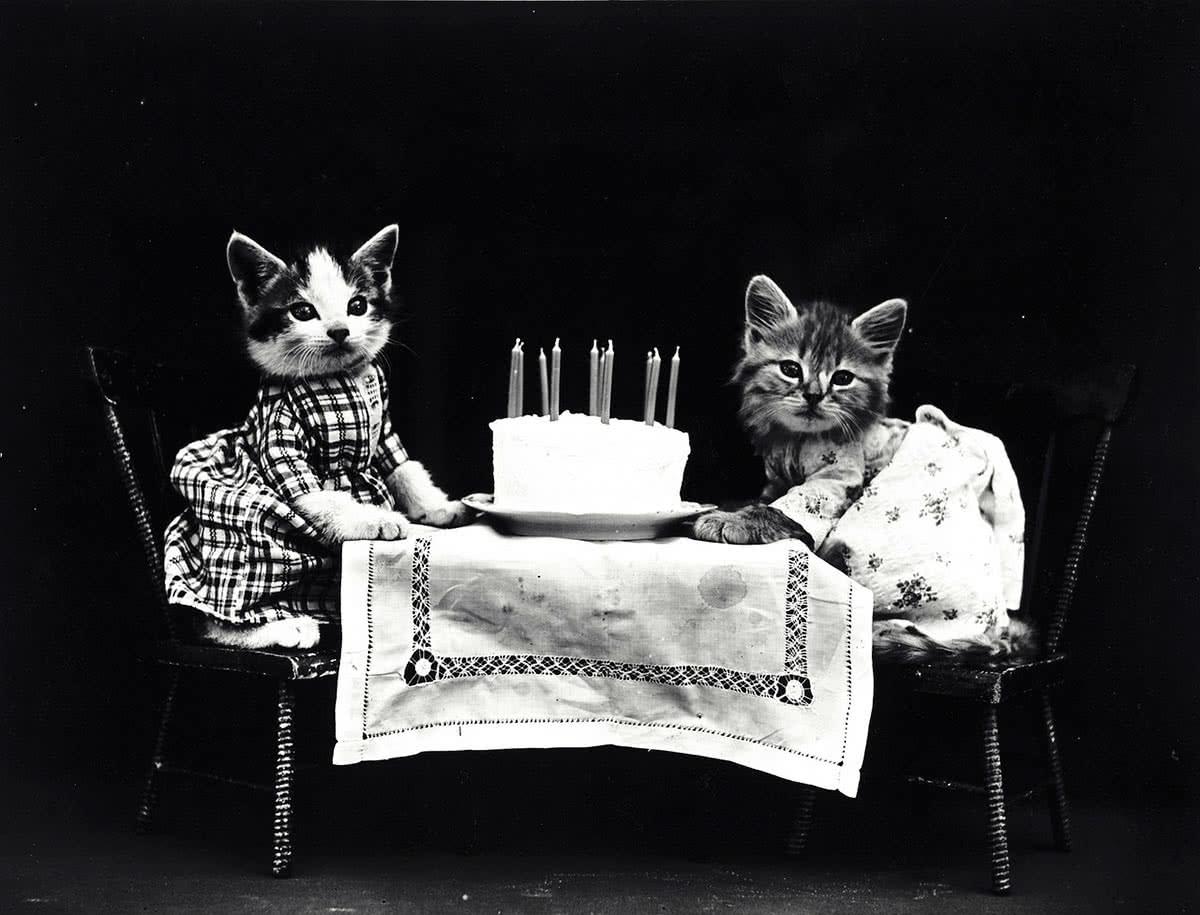 Кошки не едят сладкое