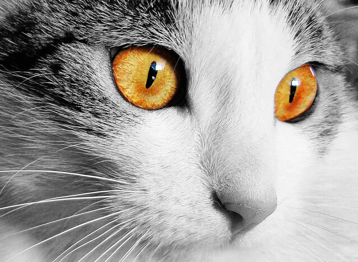 У кошек хорошее зрение
