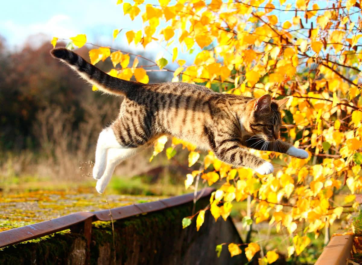 Кошки падение