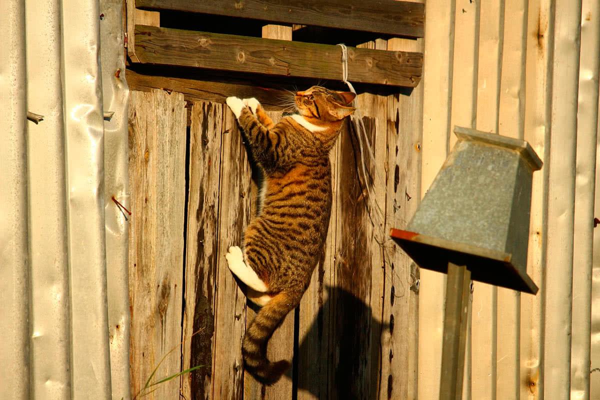 Кошки хорошо прыгают