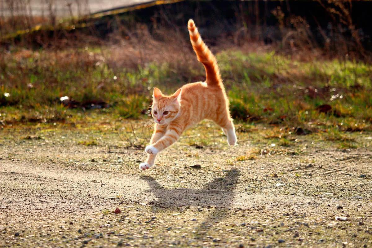 Кошки быстрые