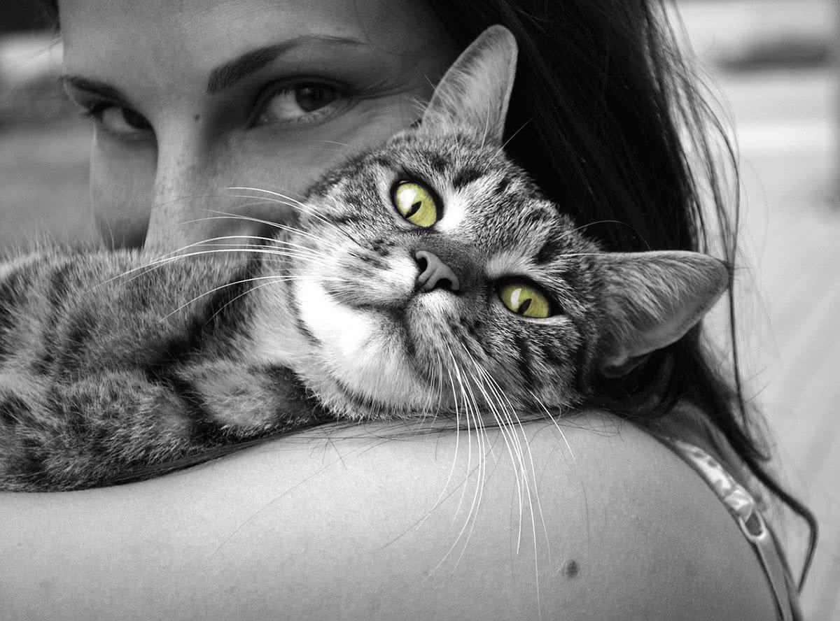 Кошки трутся о человека