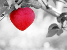 Полезные продукты питания для сердца