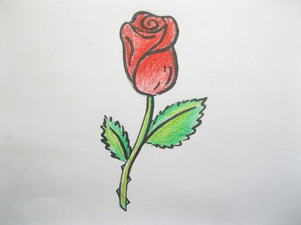 Роза цветными карандашами