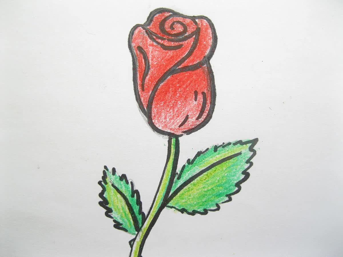 Рисунок розы карандашами