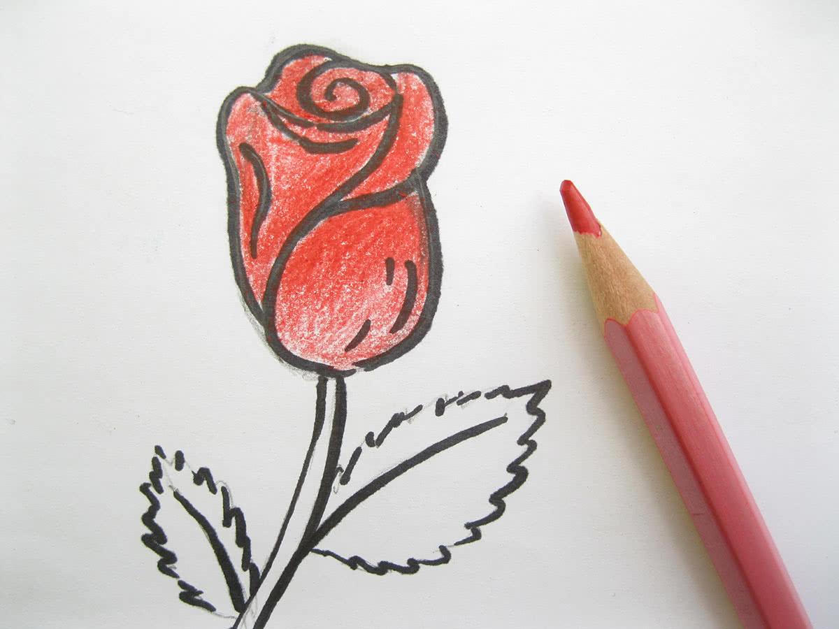 Роза рисунок раскрашивание