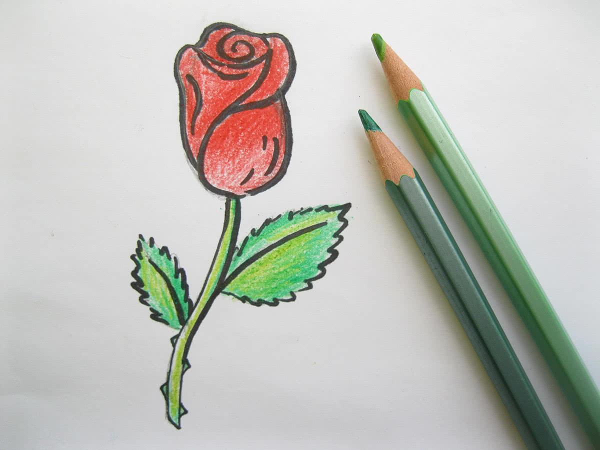 Разукрашивание рисунка розы