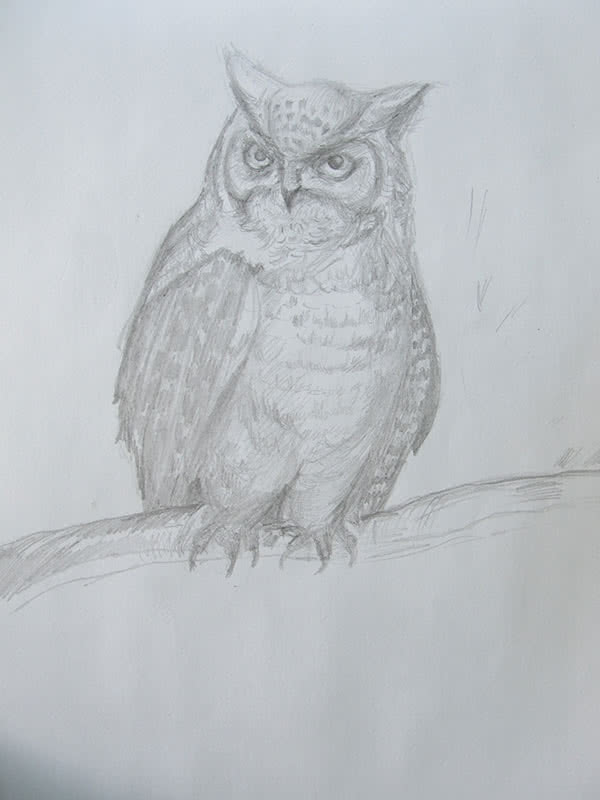 Сова карандашом рисунок
