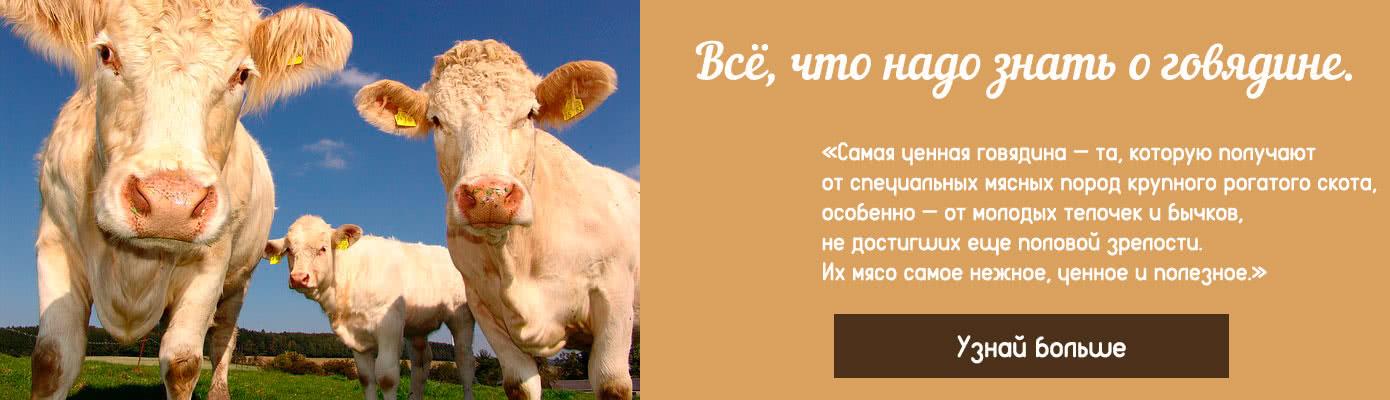 Подробно о говядине