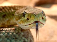 Что делать при укусе змеи