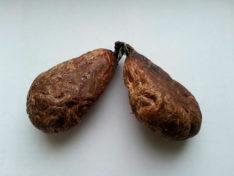 Что такое бобровая струя