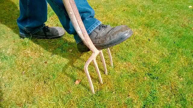 Борьба со мхом на газоне