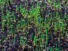 Травосмеси для газона
