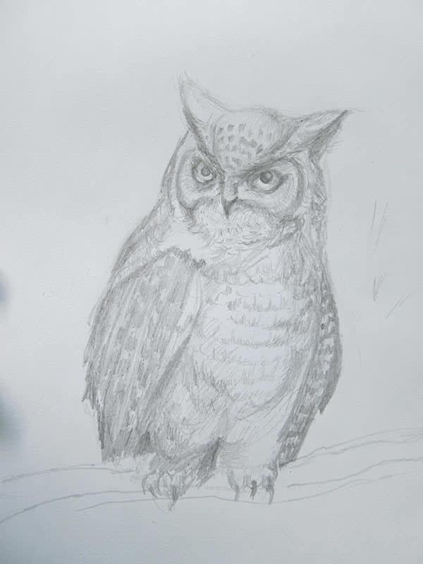 Нарисовать сову карандашом