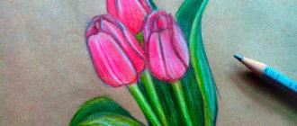Как нарисовать тюльпаны