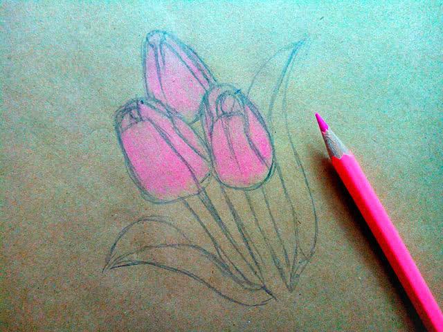 Урок рисования тюльпанов цветными карандашами