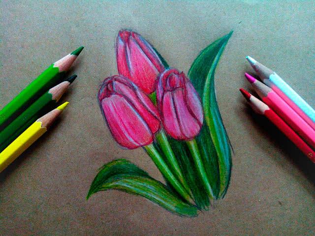 Тюльпаны цветными карандашами поэтапно
