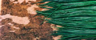Как сохранить зеленый лук на зиму