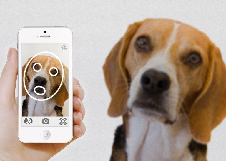 Мобильные приложения для ваших животных